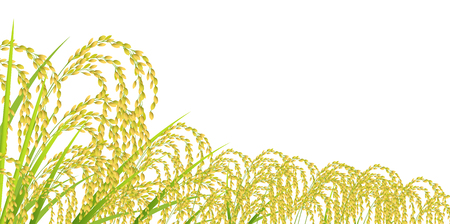Rice autumn landscape background Illustration
