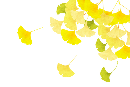 Ginkgo Leaves Autumn Background