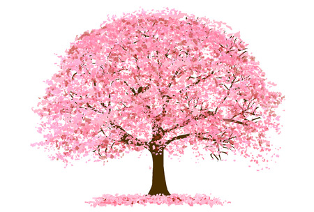 Cherry Blossoms Spring flower icon Stock Illustratie