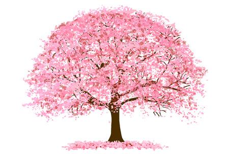 Cherry Blossoms Spring flower icon Illustration