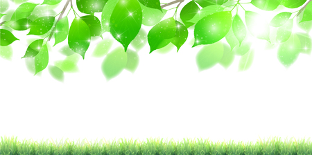 Fresh green leaves landscape background