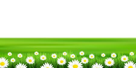 Flower plains landscape background