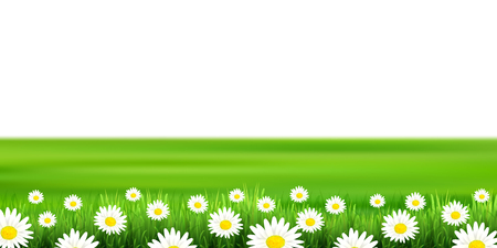 Flower plains landscape background