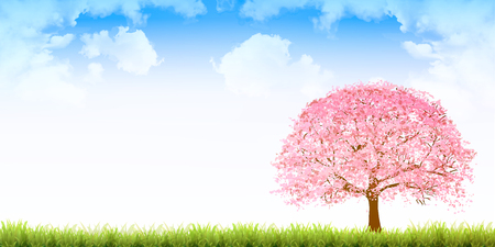Cherry blossoms spring flower background illustration.