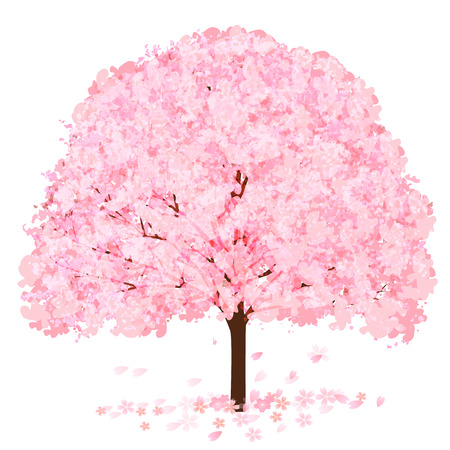 Cherry Blossoms tree Spring Flower Icon