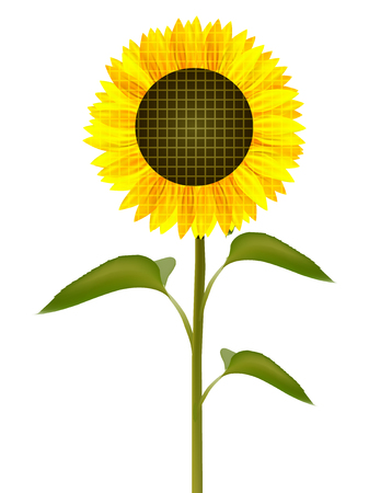 Sunflower icon on a white background