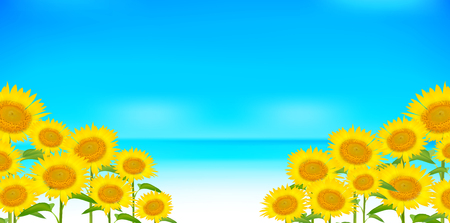 Sunflower summer scenery background