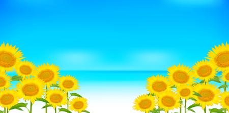 Sunflower summer scenery background