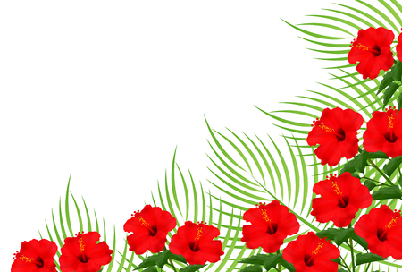 Hibiscus palm plant background Illustration