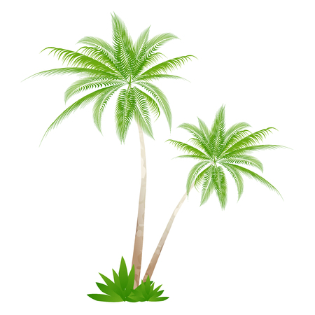 Palm tree Palm summer icon