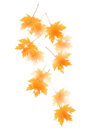 Autumn leaves autumn leaves background