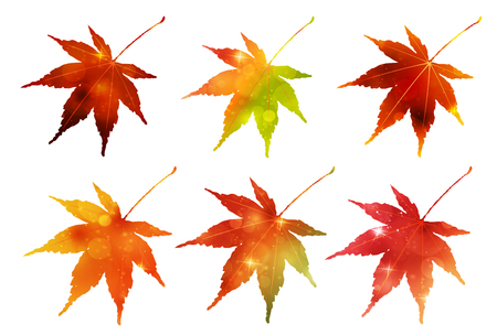 Autumn leaves Maple autumn icon