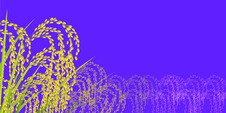 Rice Rice crop autumn Background