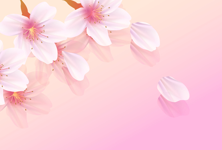 Cherry Blossom spring flower background 스톡 콘텐츠 - 117455770