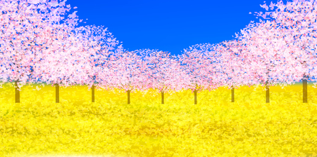 Cherry Blossom spring flower background Çizim