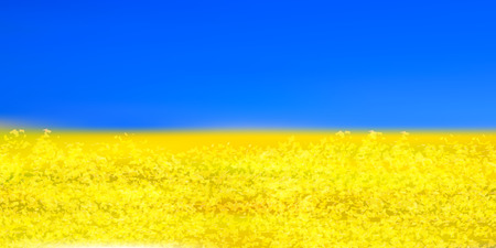 Rape flower spring flower background Çizim