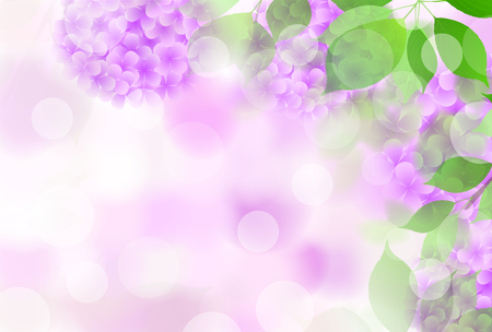 Hydrangea flower rainy season background