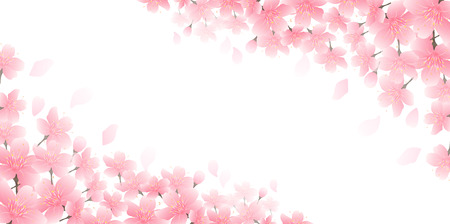 Cherry blossom spring flower background