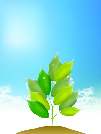 Fresh green sprout sky background