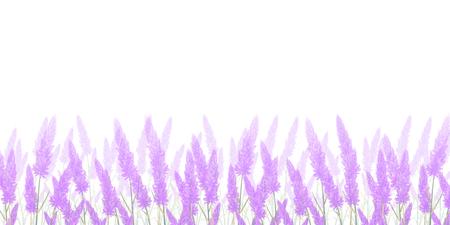 Lavender flower summer background Stock Illustratie