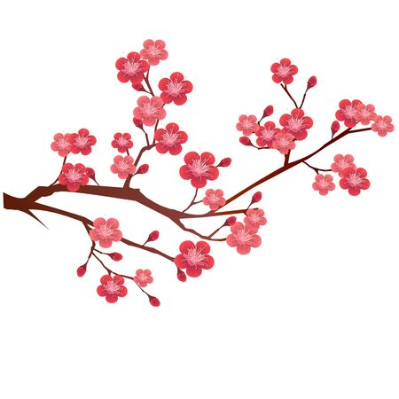 Icono de primavera de flor de flor de ciruelo Ilustración de vector