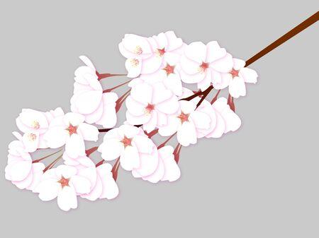Cherry blossom tree spring icon