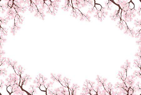 Fondo de flores de primavera de flor de cerezo