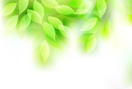 Fresh green leaves green light background