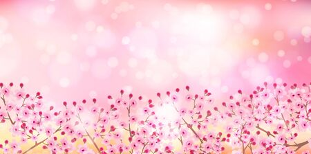 Cherry blossom Spring flowers background