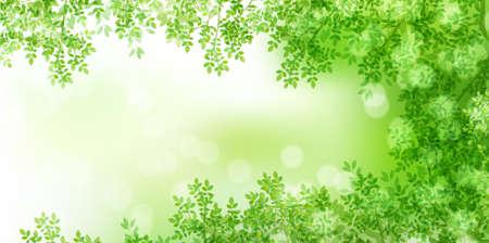 Fresh green leaves spring background Ilustração Vetorial