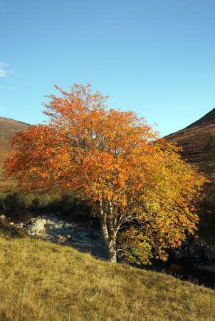 glen: Autumn colours in Glen Roy. Stock Photo