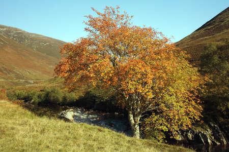 glen: Glen Roy in Autumn.