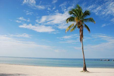 coconut tree at the beach Stock Photo - 2249656
