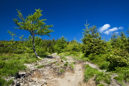 Beautiful polish mountains Beskidy. Summer landscape. Stock Photo