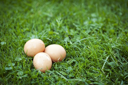 Group of three fresh eggs on grass. Easter symbol.