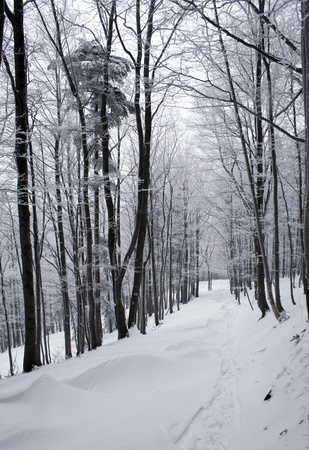 Winter path surrounded by trees in polish mountains Beskidy  Winter landscape
