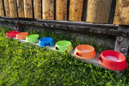 Colorful dog bowls on a wooden board.