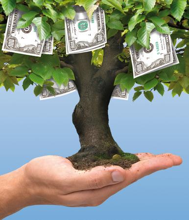 dinero: Cientos de dólares árbol de dinero que crecen en la mano del hombre - concepto de negocio