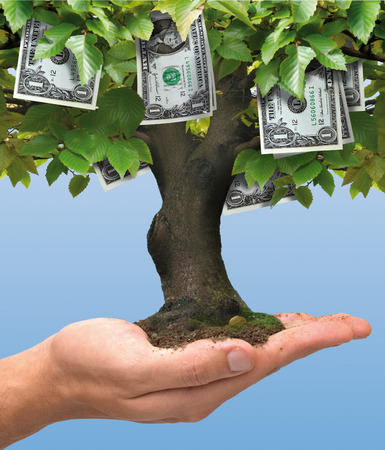 Dollar money tree growing on human hand - business concept