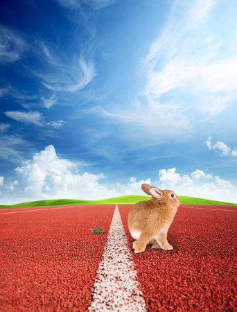 finishing line: Tortise and the Hare at the finishing line