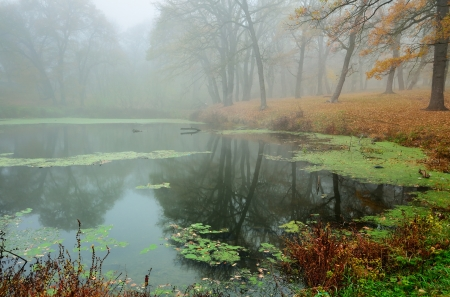 The fog in the wood of fall,reflection in pond photo