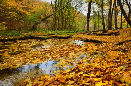 The strem in autumn forest about Stavropol photo