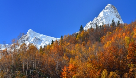 This is colorful forest in Caucasus mountains in fall photo