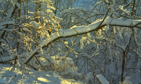 This is sunny morning in Caucasus nature in winter photo