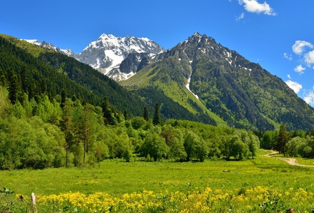 This is sunny meadow in Caucasus mountains in summer photo