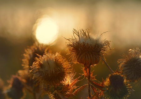 thorny: This is thorny bush about Caucasus lake in morning