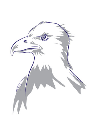 realistic expresive drawing of eagles head from profile, used two colours, shadowed lines and shadows