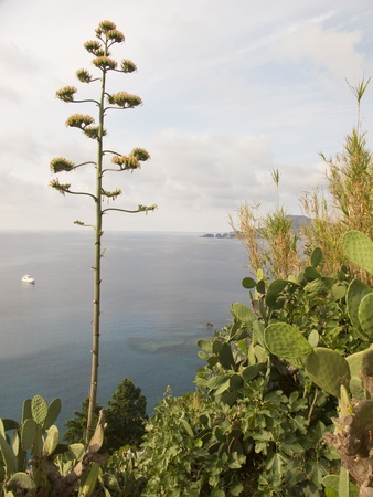 Seascape of Ponza with wild cactus and plants framing the foreground