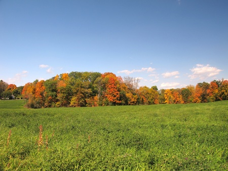 Green Grass Field with Trees in Autumn Foliage in Background