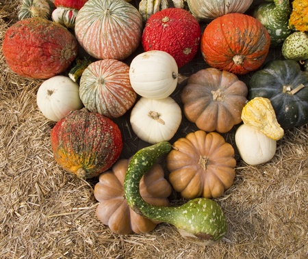 Display of pumpkins and gourds in triangle pattern Stock Photo